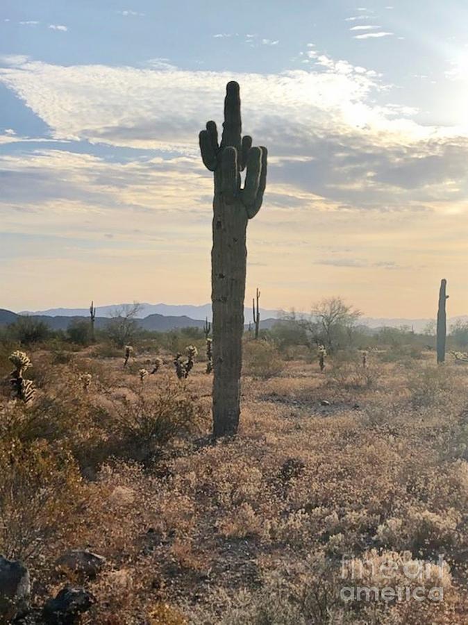 Mighty Salome Arizona Cactus Photograph