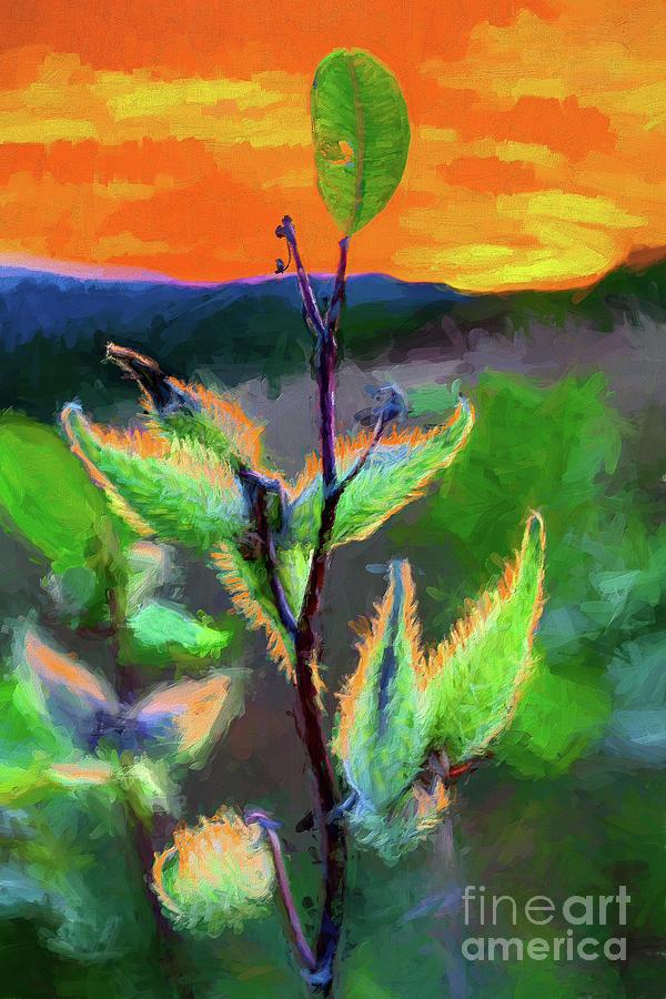 Milkweed at Sunrise AP by Dan Carmichael