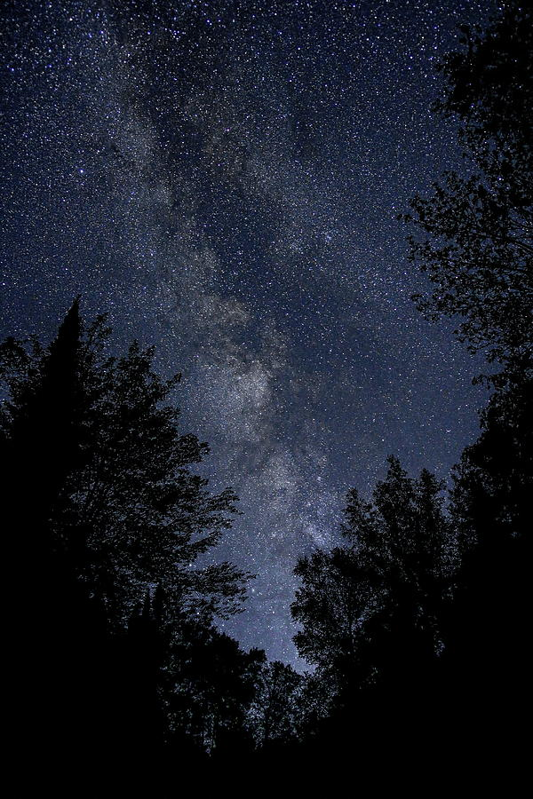 Milky Way Rising Over The Trees by Dale Kauzlaric