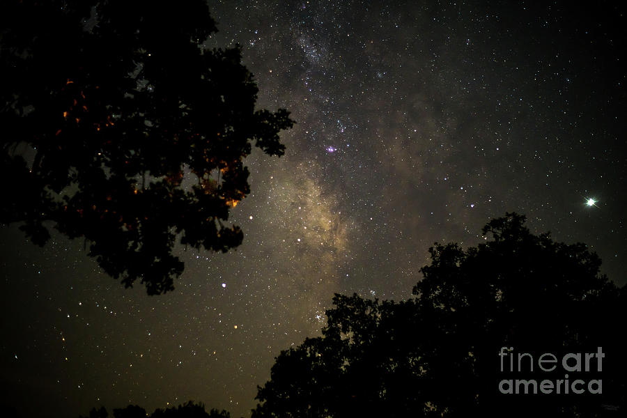 Milky Way Trees by Jennifer White
