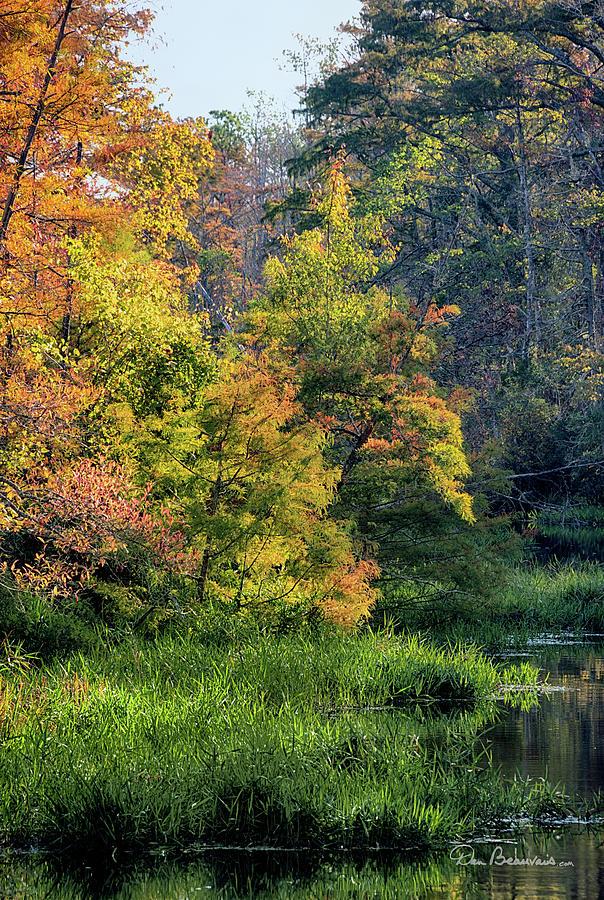 Milltail Creek Autumn 3297 by Dan Beauvais