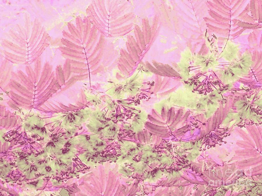Mimosa Pink by Cveti Dinkova
