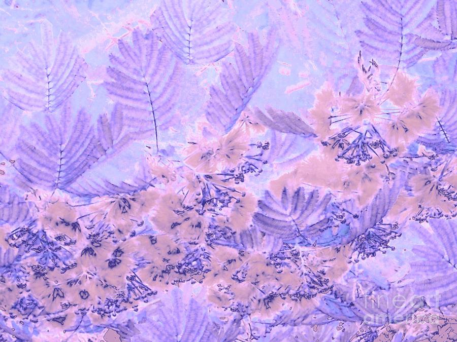 Mimosa Purple by Cveti Dinkova