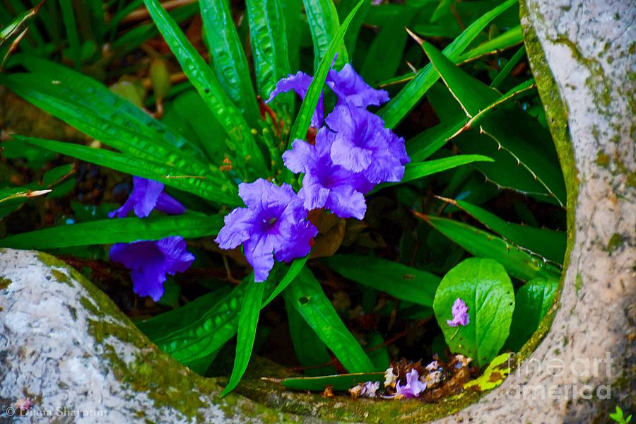 Mini Petunias by Diana Mary Sharpton