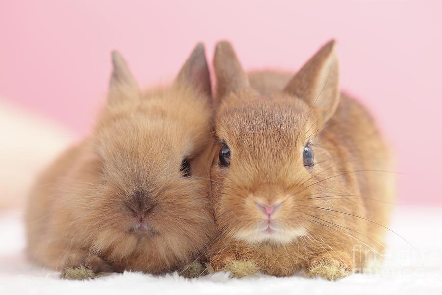 Mini Rabbits Photograph by Shinya Sasaki/aflo