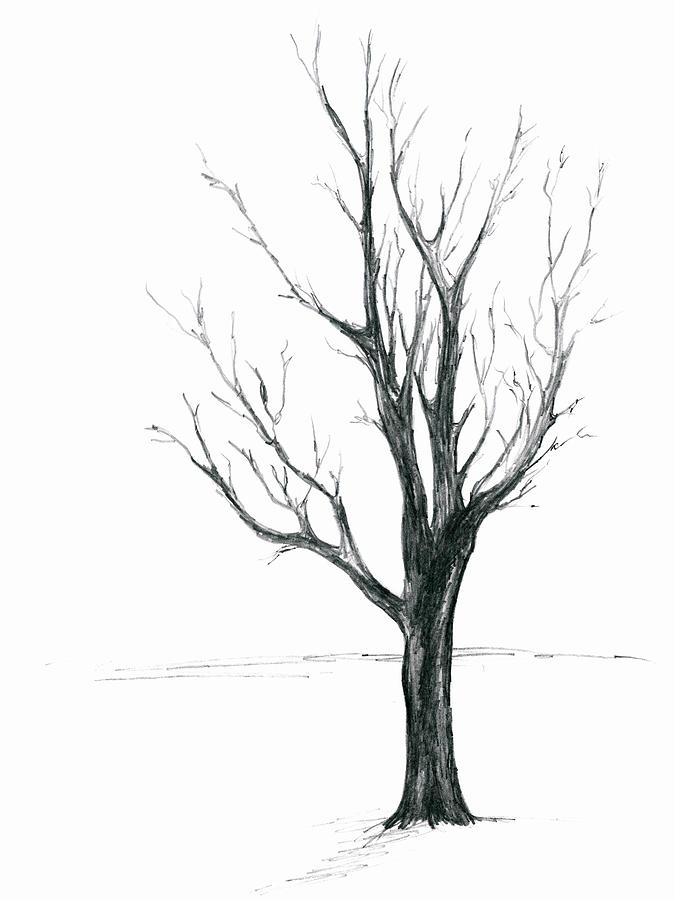 Minimal Winter Maple Tree by MM Anderson
