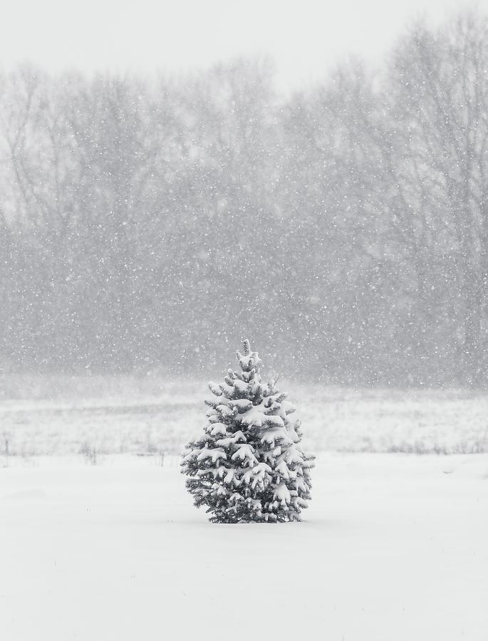 Minimal Winter Scene by Dan Sproul