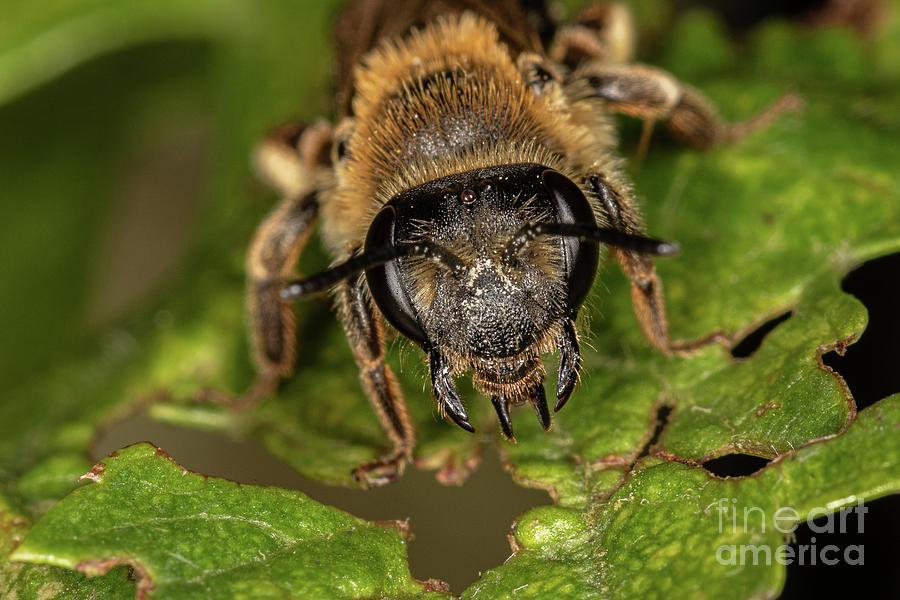 Mining bee by Brian Roscorla