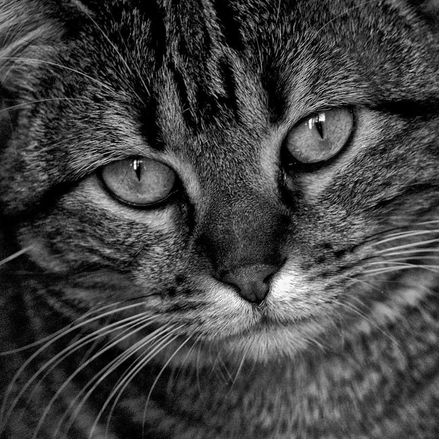 Cat Photograph - Minouche by Christine AVIGNON