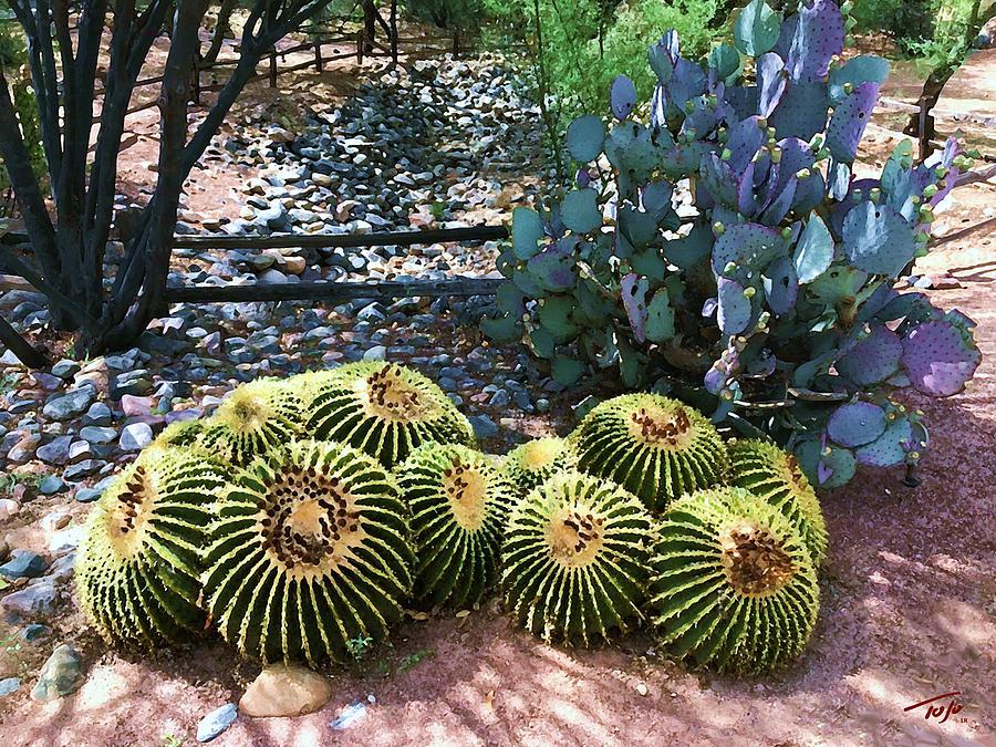 Miraval Cactus by Tom Johnson