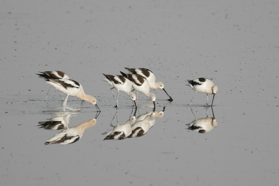 Mirror Image by Donald Brown