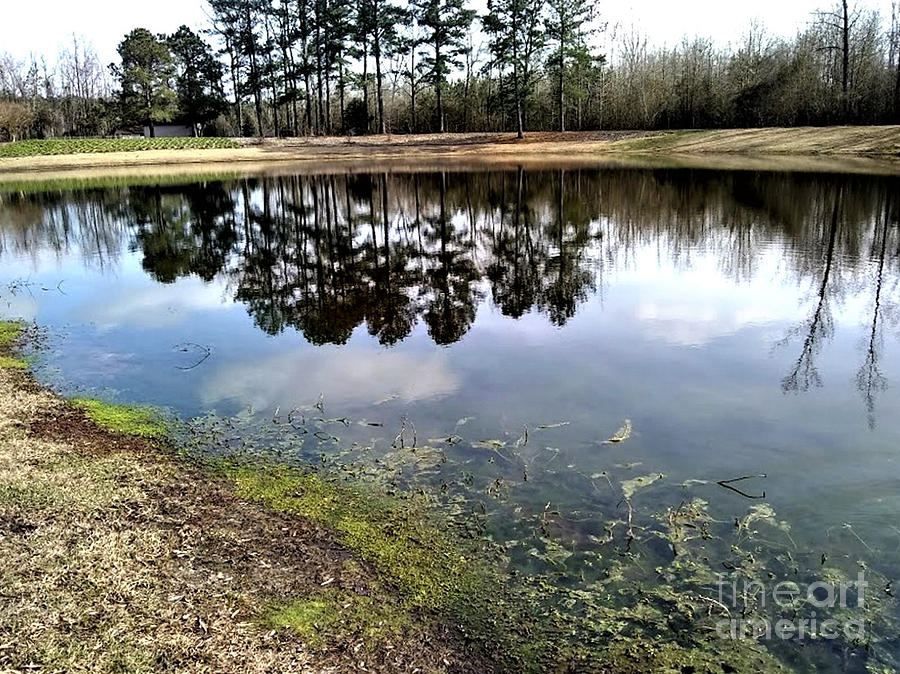 Mirror Pond I by Inscape Art Photography