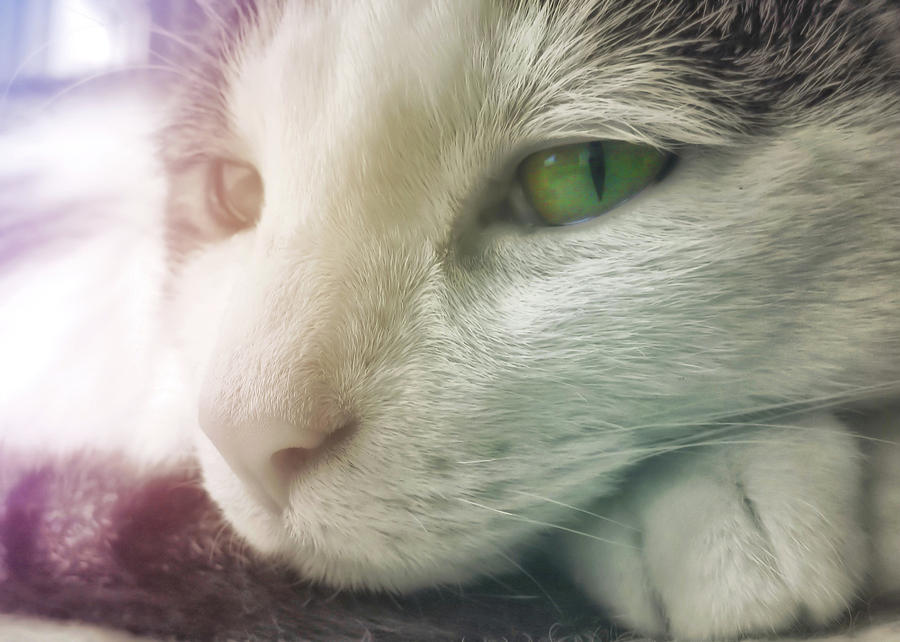 Cat Photograph - Miss Ginny by JAMART Photography