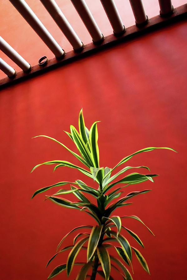 Missing Pipe Vs The Plant by Prakash Ghai
