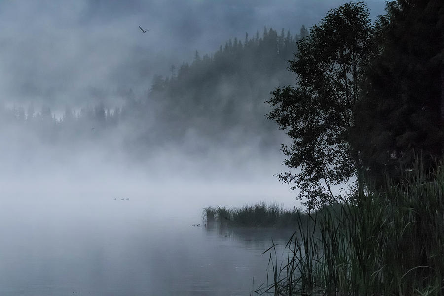 Mist and Silhouettes on the Lake by Belinda Greb