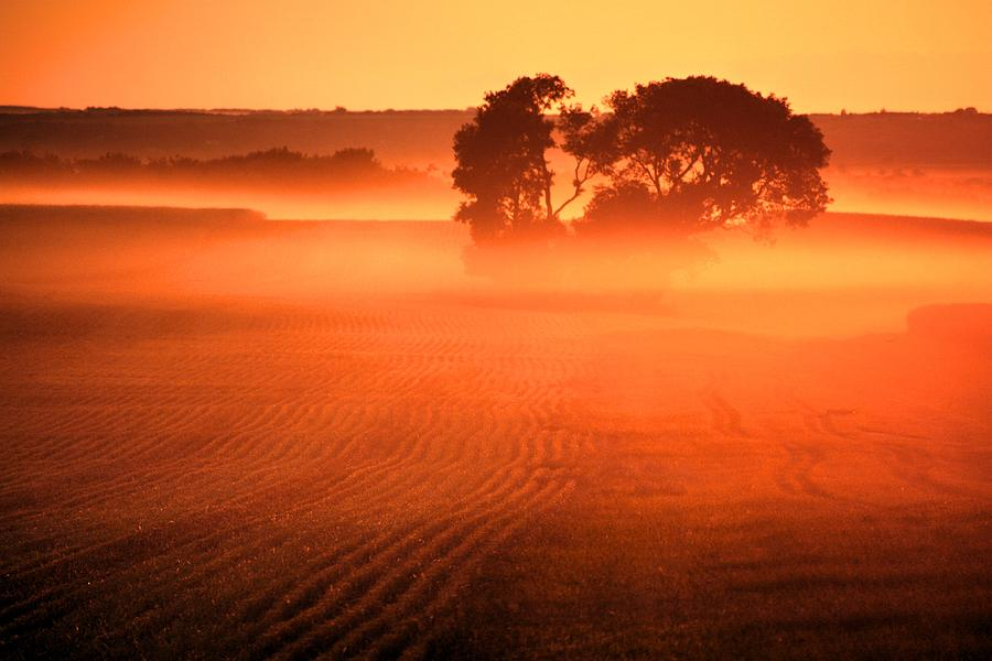 Mist Moor by David Matthews