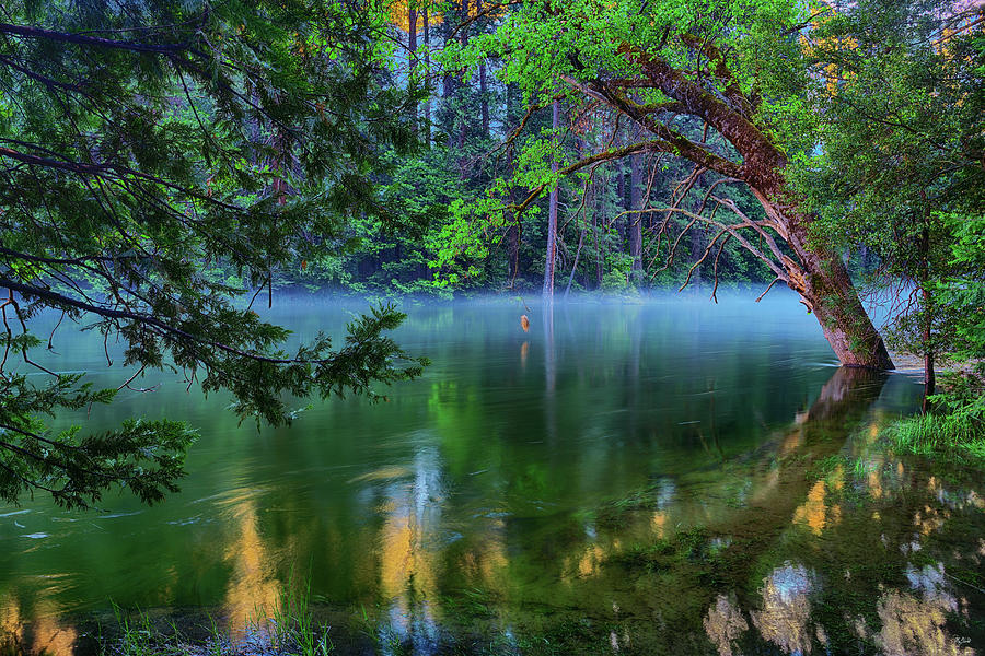 Mist on the Merced by Greg Norrell