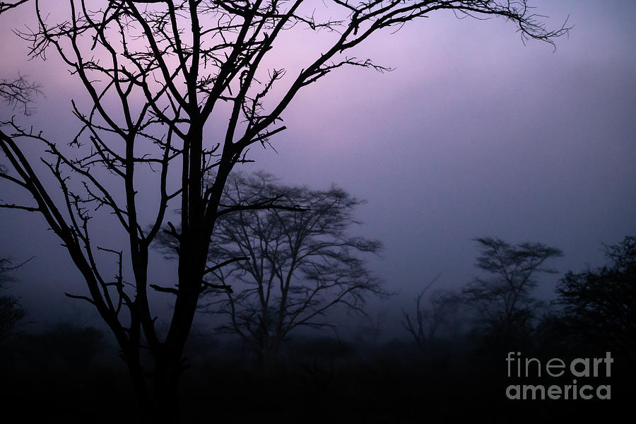 Misty and moody sunrise in South Africa by Jamie Pham
