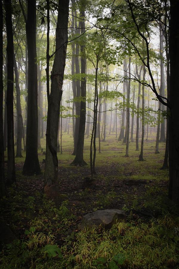 Misty Day by Lj Lambert