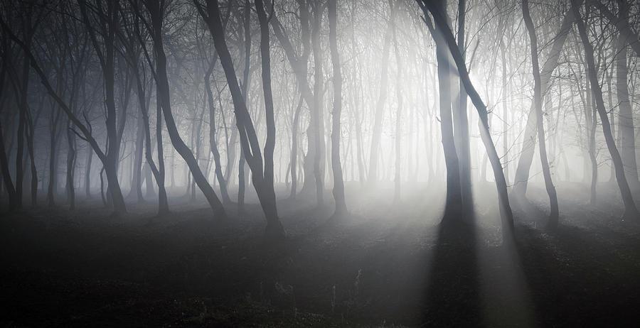 Misty forest by Adrian Borda