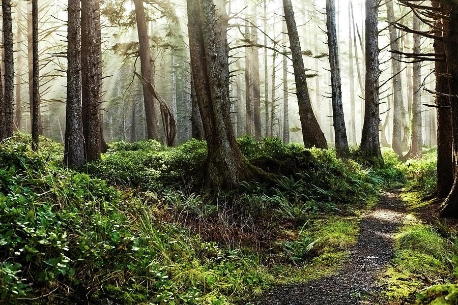 Misty Forest Landscape Photograph by Andipantz