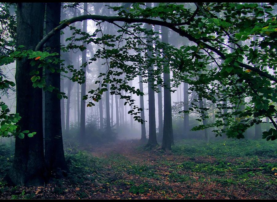 Misty Forest Photograph by Photo - Riana Navrátilová