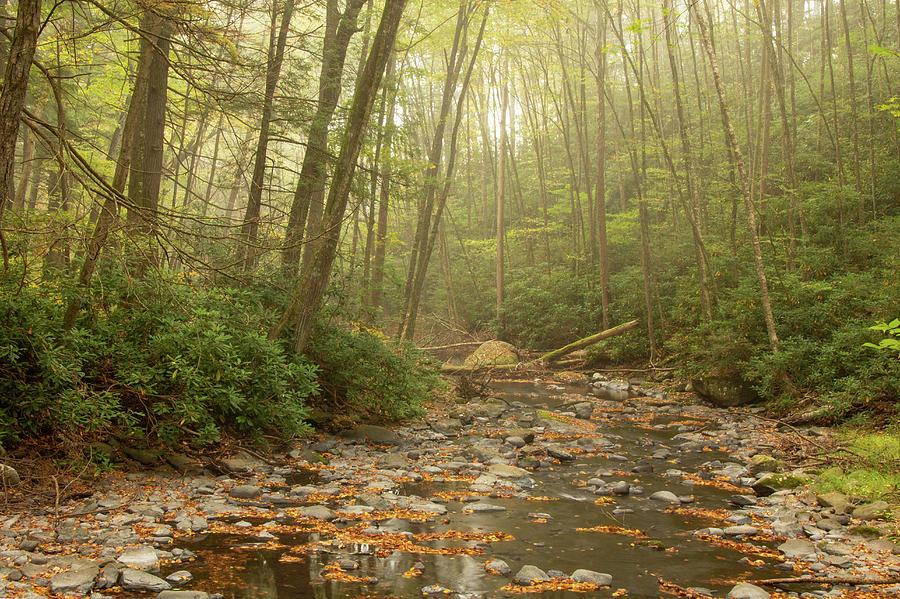 Misty Morn At Dingmans Creek by Kristia Adams