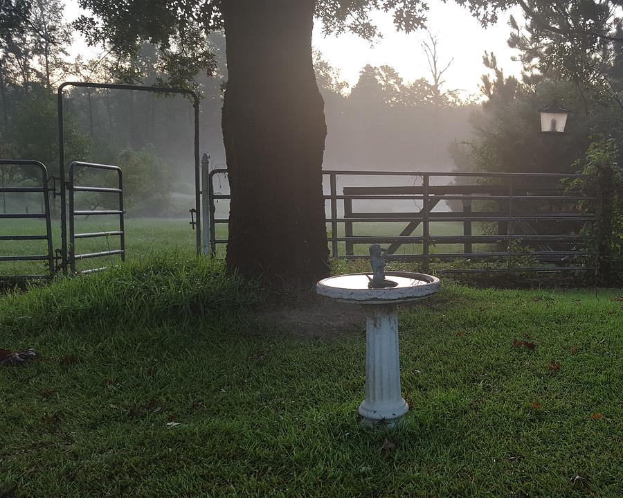 MISTY MORNING BIRD BATH by Pamela Smale Williams