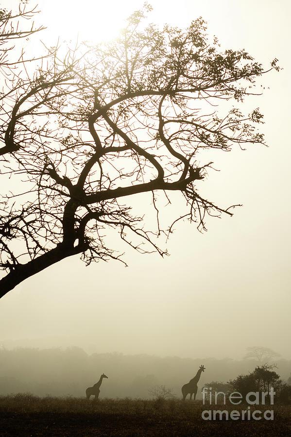 Misty Morning Magic by Jamie Pham