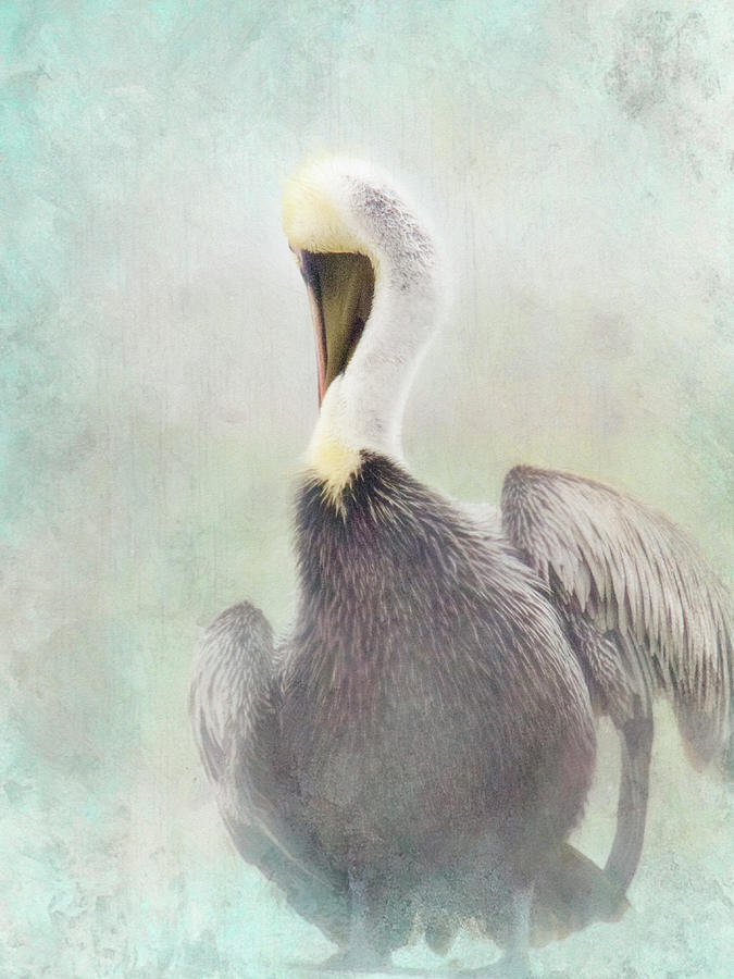 Misty Morning Pelican by Andrea Layne