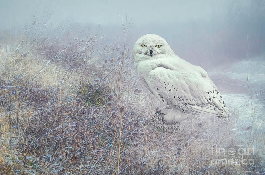 Misty Morning Snowy Owl. by Brian Tarr