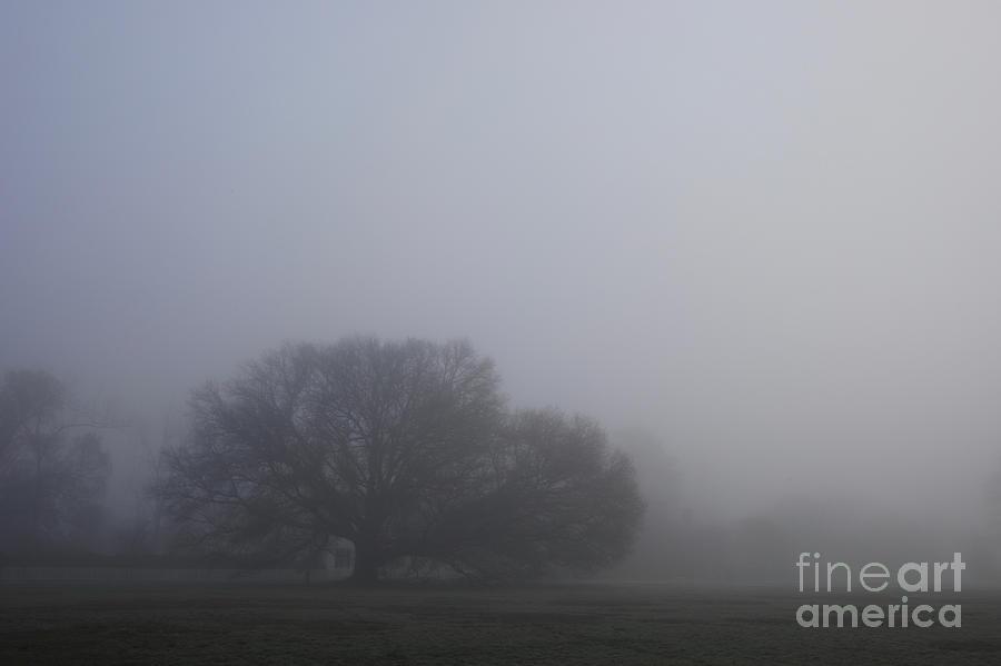Misty Oak Tree by Rachel Morrison