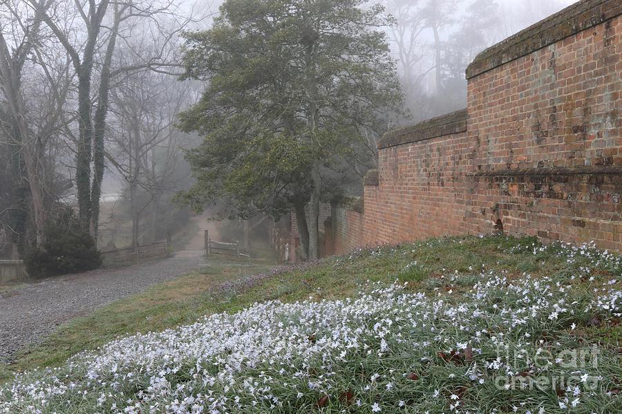 Misty Path and Starflowers by Rachel Morrison