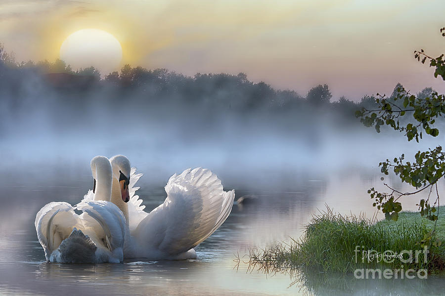 Misty Swan Lake by Morag Bates