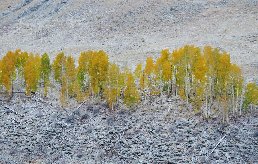 Aspen Photograph - Mixed Seasons by Lori J Welch