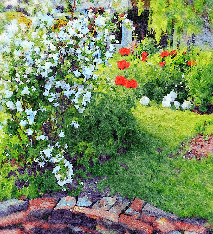 Mock Orange and Poppies by Judi Suni Hall