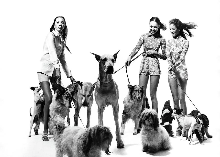 Models with Dogs on Leashes, Vogue Photograph by Bert Stern