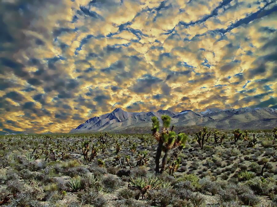 Mohave Desert View by Anthony Dezenzio