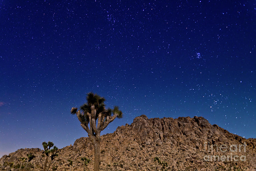 Mojave Desert Joshua Tree Under The Stars No 3 Photograph By B