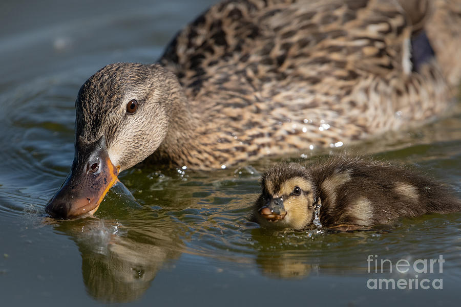 Mom and Child by Lisa Manifold