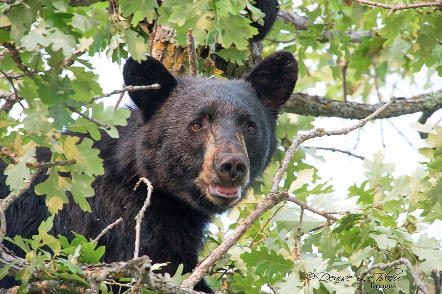 Momma Bear by Denise LeBleu