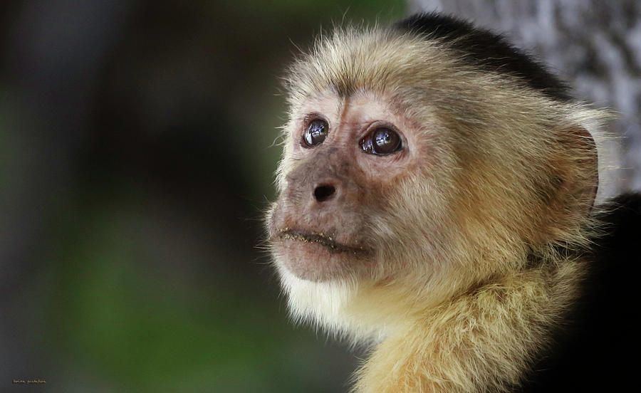Monkey Photograph - Mommas Wisdom by Brian Gustafson