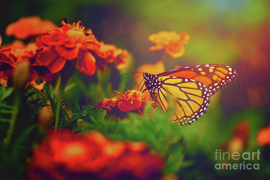 Monarch at Sunset Photograph by Heather Hubbard