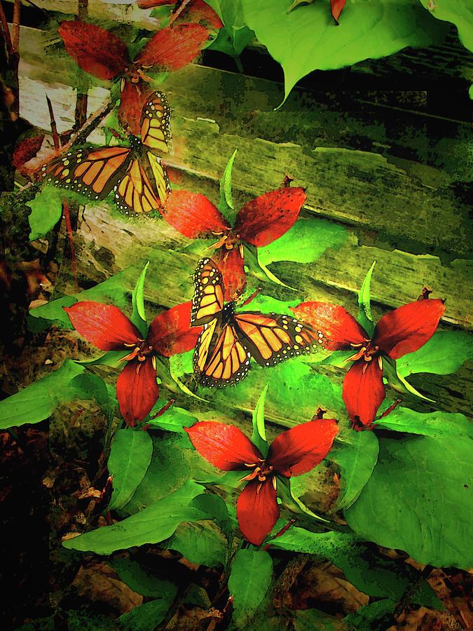 Monarch Butterflies Enjoy The Delicate Purple Trillium Flowers by Patricia Keller