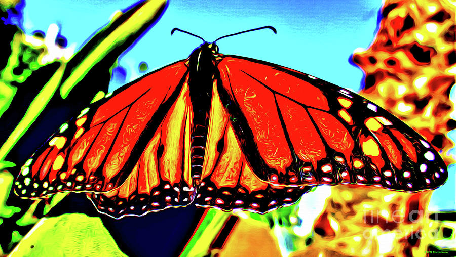 Magnificent Monarch Butterfly by Jerome Stumphauzer