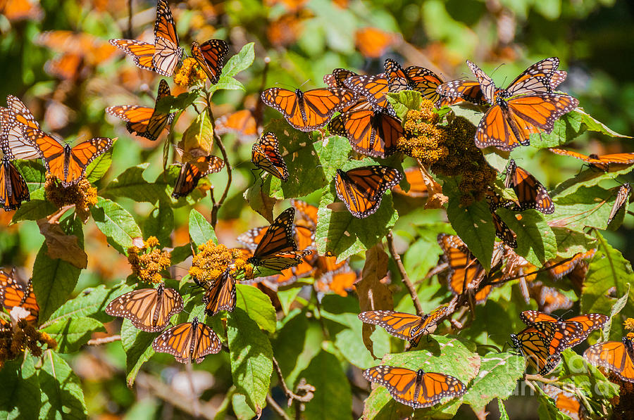 Forest Photograph - Monarch Butterfly Biosphere Reserve by Noradoa