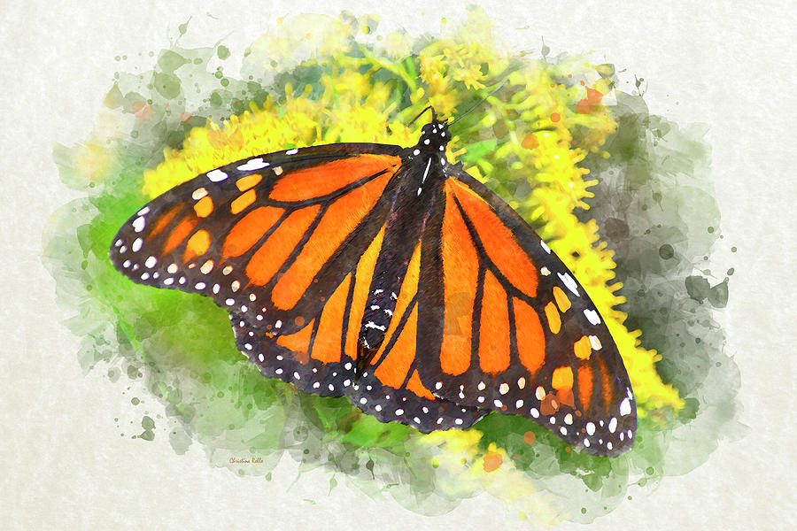 Monarch Butterfly Mixed Media - Monarch Butterfly by Christina Rollo