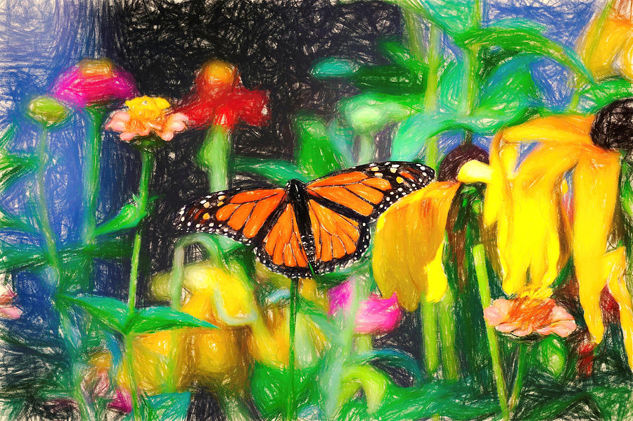 Monarch Butterfly Colored Pencil by Don Northup