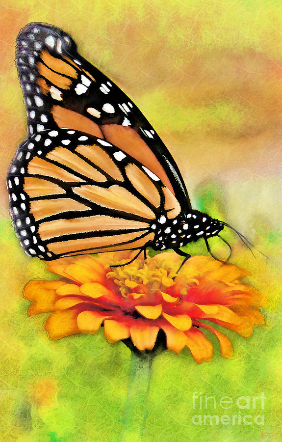 Monarch Butterfly On Flower by Jeff Breiman