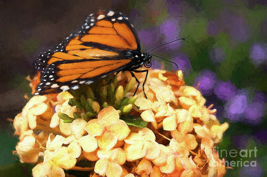 Monarch Butterfly by Patti Schulze